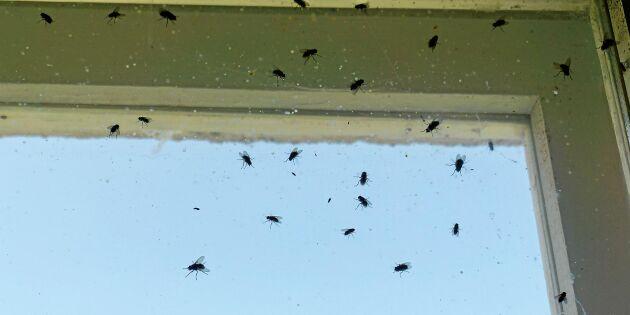 Därför använder flugorna ditt hem som toalett