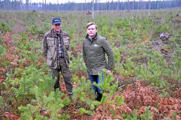 Fröträden ger så många tallplantor för att älgar och annat klövvilt ska få foder samtidigt som tillräckligt många tallar klarar sig oskadda, konstaterar Ingemar Karlsson och Carl-Fredrik Hamilton.