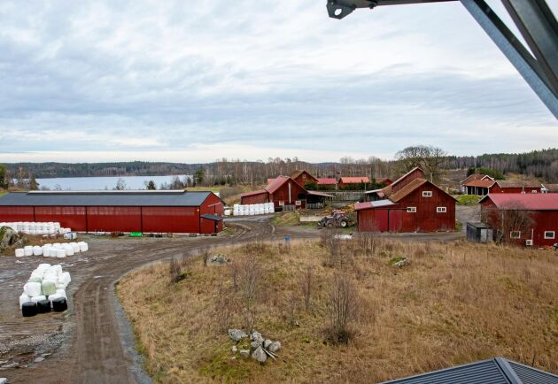 All halm som djuren behöver odlar Tobias Larsson och Camilla Söderberg själva.