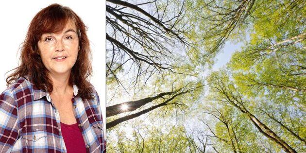 Krönika: Jag ser aldrig skogen som bara träd igen