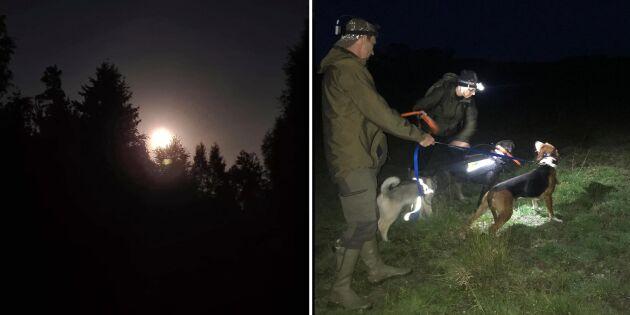 Häng med på grävlingsjakt i natten