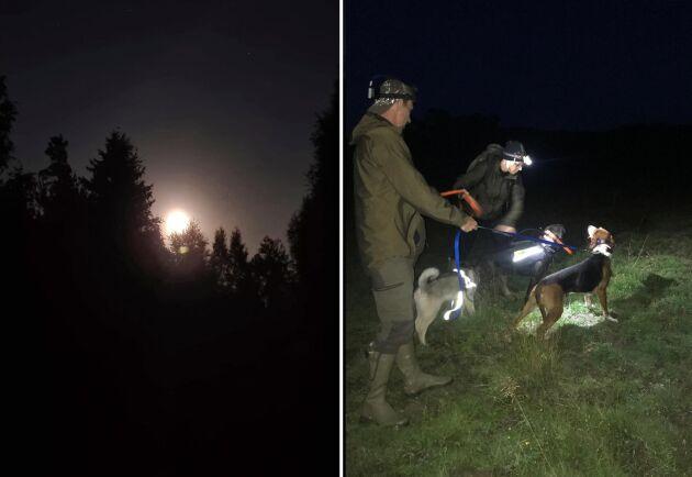 """Jakt i pannlampans sken och dags för släpp. """"Det händer aldrig att hundarna skadar sig trots att de jagar i mörker"""", säger Anders Hultstrand."""