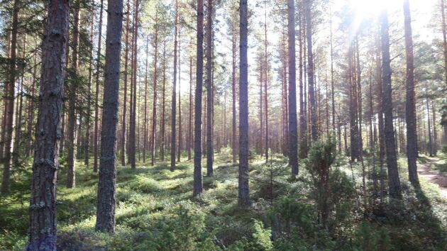 Storbritannien är den största importören av svenska skogsprodukter i världen.