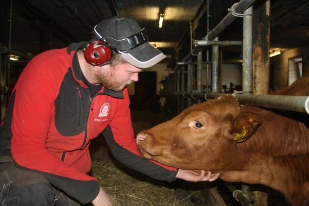 Johan Persson är en ung bonde som nu väljer att satsa på nötköttsproduktion. Pappa Marcus som också är bonde i trakten är med och stöttar och hjälper till.