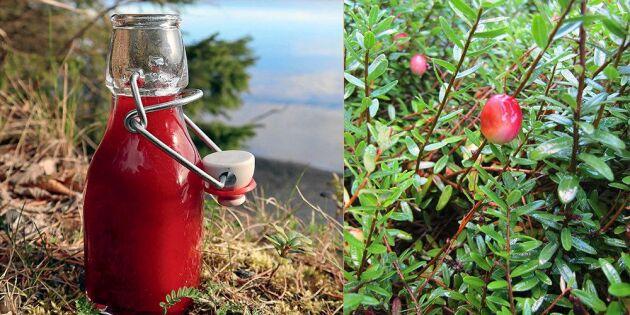Antioxidantdrink med tranbär – så blandar du hälsokuren!