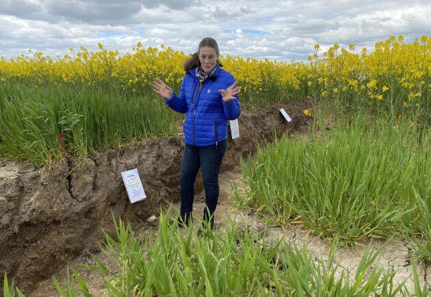 Gropen blev bara ett dike på Borgebys inställda fältdagar 2020. Gunilla Frostgård från Yara berättade om resultatet av höstgödslat höstkorn.