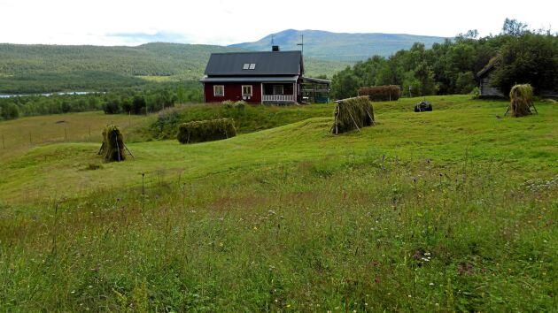 Gården Vardofjäll i södra Lappland på sommaren, omgiven av doftande höhässjor och fjäll. Ingrid Persson och Ronny Svarto har bott här sedan 1978, då de tog över efter Ingrids morföräldrar.