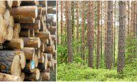 Mellanskog delar ut 38,9 miljoner till medlemmar