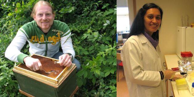 Skolelever hjälper forskare hitta bästa maten för bin