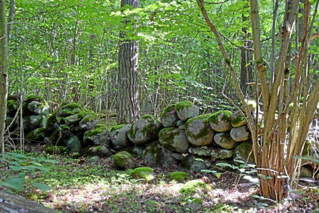En stengärdesgård löper genom den ljusa lövskogen.