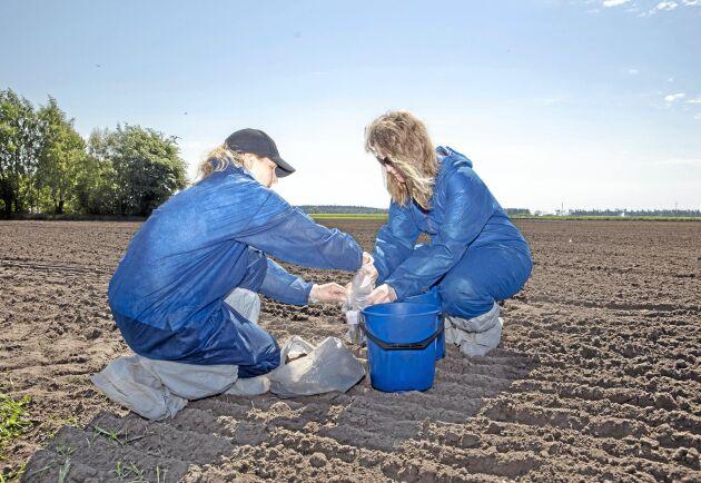 Arkivbild från inventering som Jordbruksverket gjorde 2018. Christina Kanneberg och Carina Alaby Dieden från växtkontrollenheten har tagit jordprover.