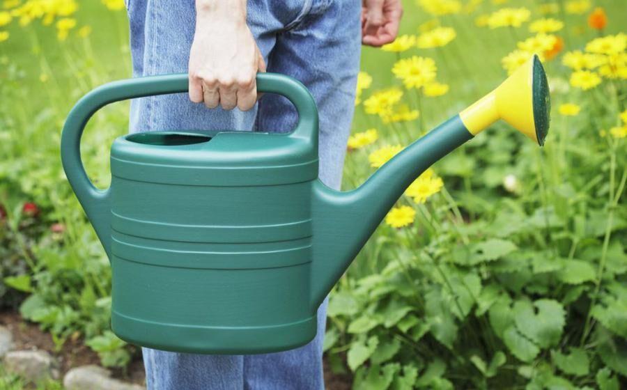 Land.se listar 8 miljövänliga knep för att hålla myrorna borta.