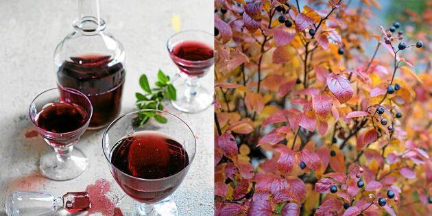 Gör härlig saft av nyttiga aroniabär – bästa receptet