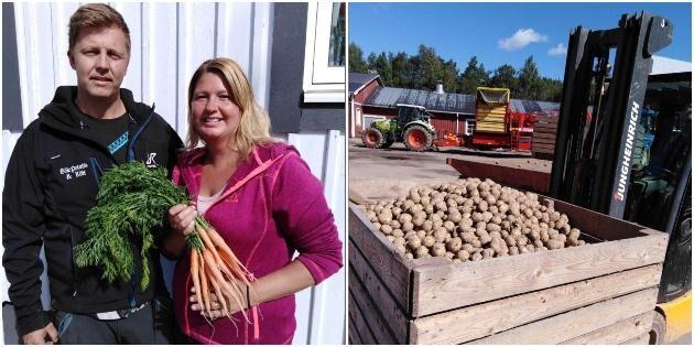 Potatisodlare hoppas på lönsamma morötter