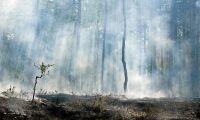 Långsiktigt skogsbruk ger störst klimatvinst