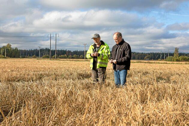 Lantbrukaren Nils Gunnar Mattsson och Lantmännens regionchef Hans Westbomvid inspekterar årets skörd av korn på Nils Gunnars mark.