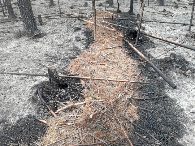 Så här såg det ut efter finska skogsstyrelsens test av brandskyddsmedel under en kontrollerad brand förra sommaren. En till tre liter brandskyddsvätska användes per kvadratmeter.