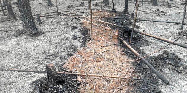 Gödselbaserad vätska ska brandsäkra skogen