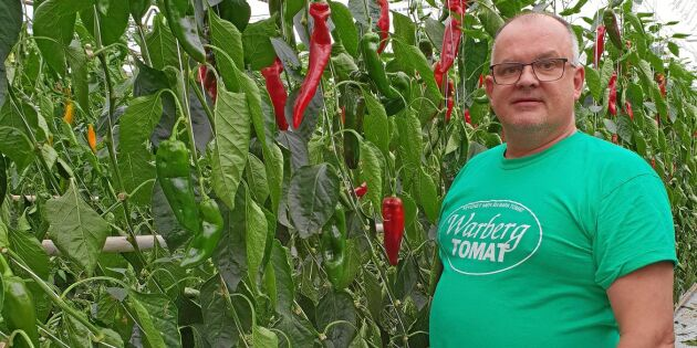 Handlarna nobbade Raimos svenska paprika – tvingades slänga hundratals kilo