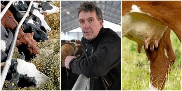 Därför satsar Stefan Gård på köttdjur och nytt stall