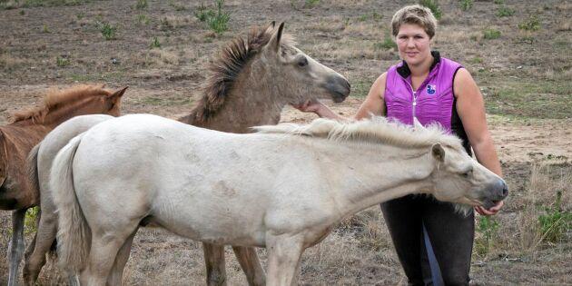 Skånsk satsning på sällsynt hästras