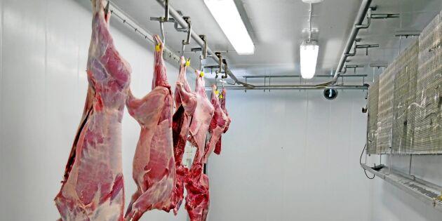 Vildsvin – köttet vi väljer bort