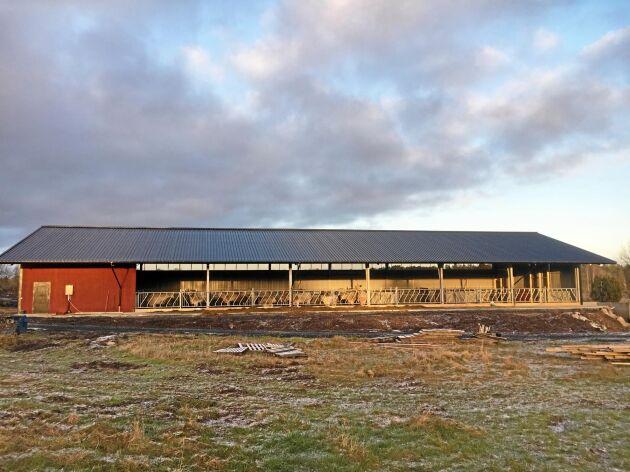 För snart två år sedan byggde Lars Mattsson det nya stallet med 23 koplatser plus rekrytering för sina charolaiskor.