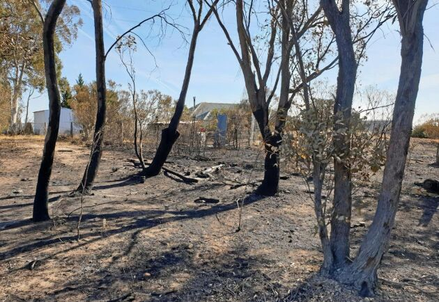 Fårbonden Laurie Ffrenchs hus, här sett inifrån brandområdet, klarade sig precis, men 70 procent av hans skog och betesmark slukades i lågorna.