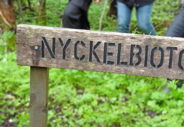 Skogsstyrelsen föreslår att registreringen av nyckelbiotoper i samband med avverkningsanmälan ska upphöra. Men samtidigt ska begreppet finnas kvar, och nyckelbiotoper registreras vid andra tillfällen.