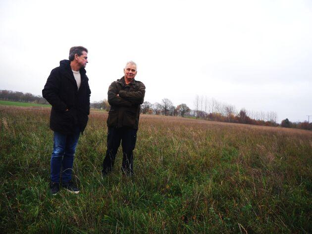 Lakrits odlas på två hektar i Allerum utanför Helsingborg