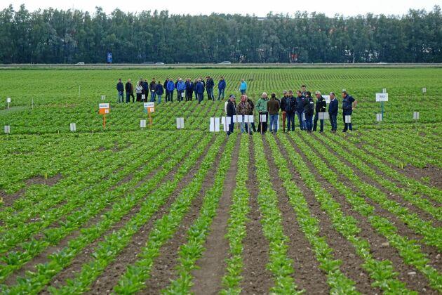 Nyligen var det fältvandring i betodlingsförsöken på Alnarp i Skåne. Där kunde deltagarna lära mer om hur lyckas med odlingen och håller koll på skadeinsekterna.