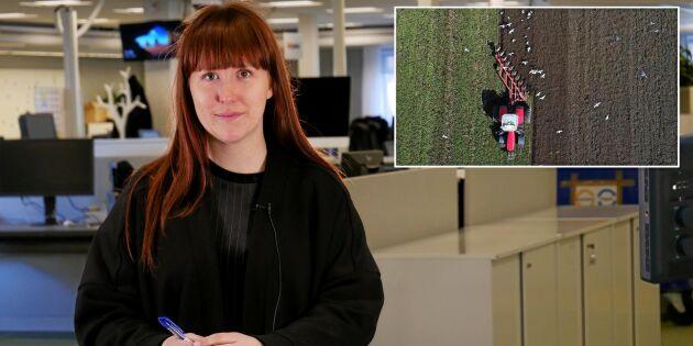 ATL TV: Bred plöjning med spansk plog