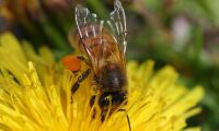 Biodlarna vill ha förbud av neonikotinoider