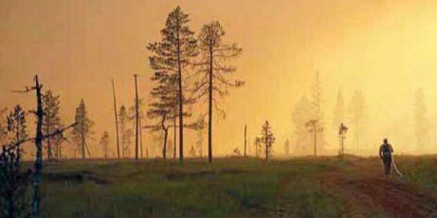 Ett år efter de stora skogsbränderna – detta hände
