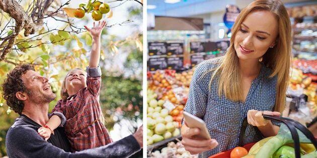 Få koll på de svenska äpplena med Äppelappen