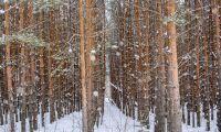 Stark konjunktur driver på EU-importen av trävaror
