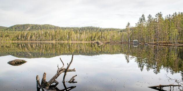 """""""I Björnlandet är varje träd en egen individ"""""""