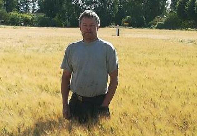 Durumveteodlaren Mika Pettersson räknar med 5 ton per hektar vilket är en normalskörd och i linje med i fjol.