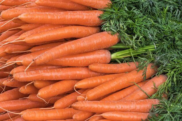 Studiens hypotes var att ekologisk odling innebär en större miljörelaterad stress för grönsaker, vilket visar sig i form av annorlunda metaboliter jämfört med grönsaker som exempelvis besprutats med växtskyddsmedel.
