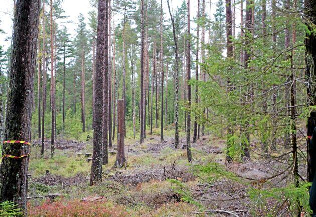 De största brandområdena under sommaren 2018 berörde cirka 21000 hektar. Statistiken visar att hälften av den skogen anmälts för avverkning.