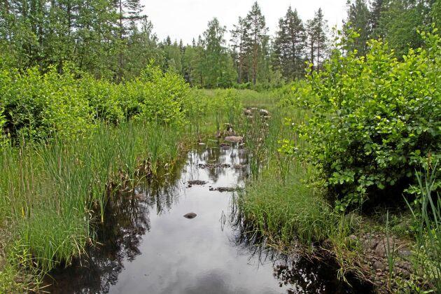 En tidigare damm i Fräsebäcken har efter utrivning förvandlats till en bäckfåra där växtligheten breder ut sig från sidorna. Utrivningen gjordes 2015.