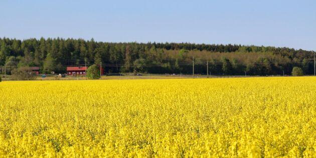 Växterna kan bli klimattåligare i framtiden