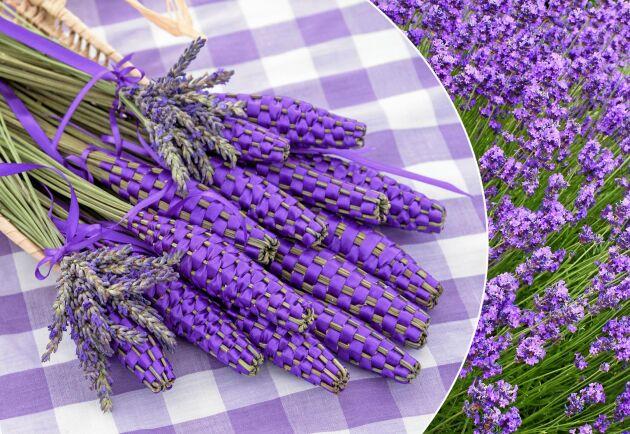 Lavendelslända med blanka, lavendelfärgade band.