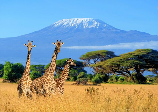 Upptäck undersköna Kenya på spännande safari genom landet.