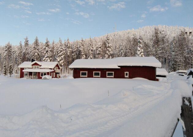 Annika Nybergs gård i Lillkorsträsk utanför Älvsbyn.