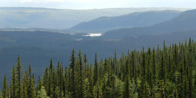 Snart avgörs tvisten om fjällnära skog