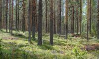 Allt färre sökande till skogsutbildningar