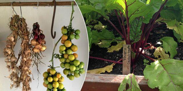 Så förvarar du sommarens skörd av frukt, grönt och bär
