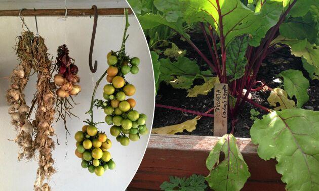 Skörda och spara sommarens grönsaker långt in på vintern. Lands odlarskola lär dig hur.