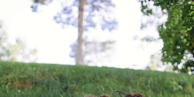 Underbara Clara tipsar: Baka och mys med barnen i sommar!